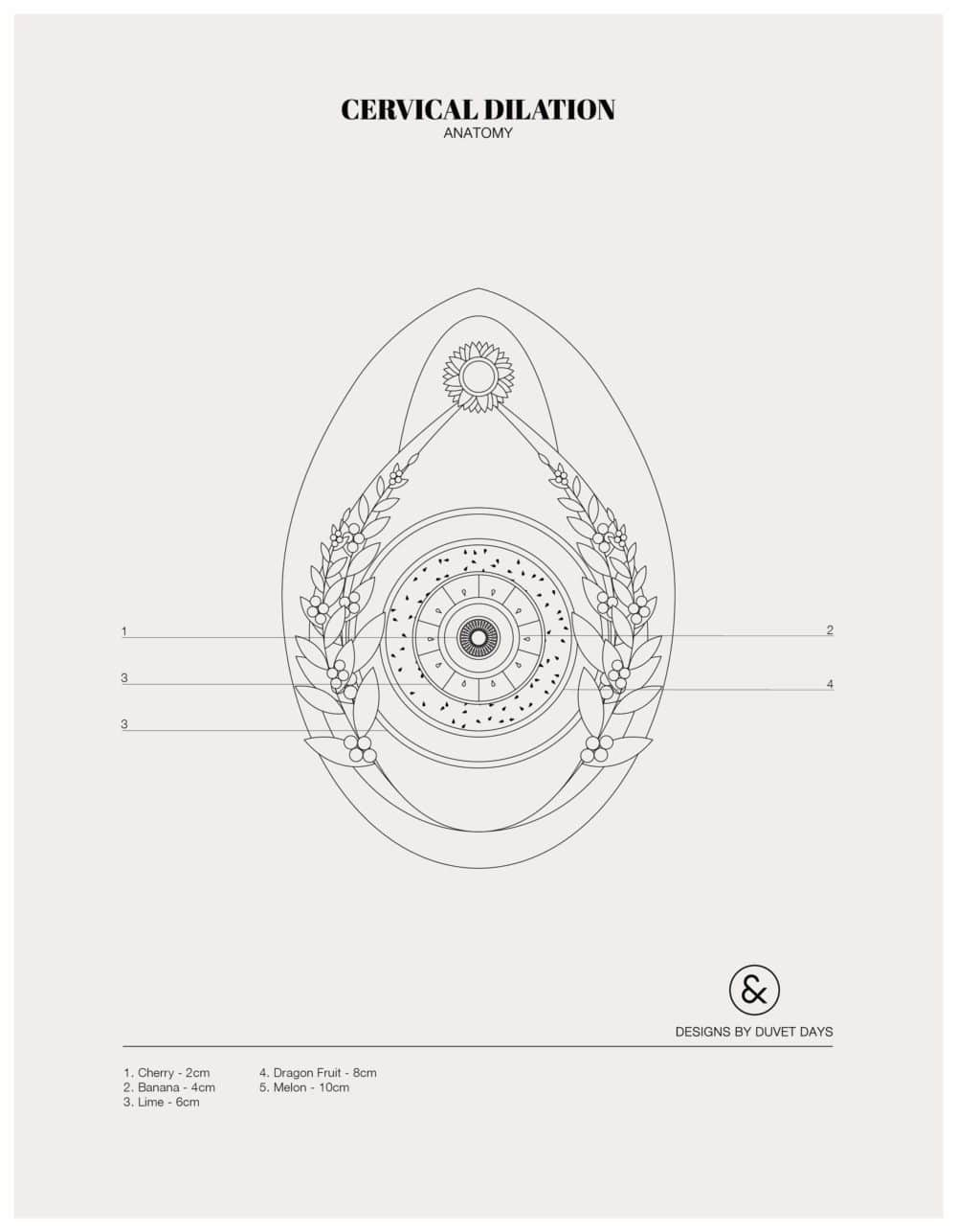 Designs By Duvet Days_8.5x11_Cervical Dilation_Colouring Sheet_Preview