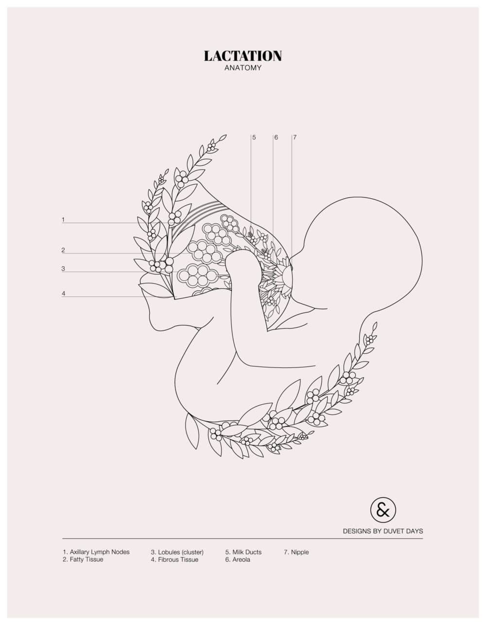 Designs By Duvet Days_8.5x11_Lactation_Colouring Sheet_Preview