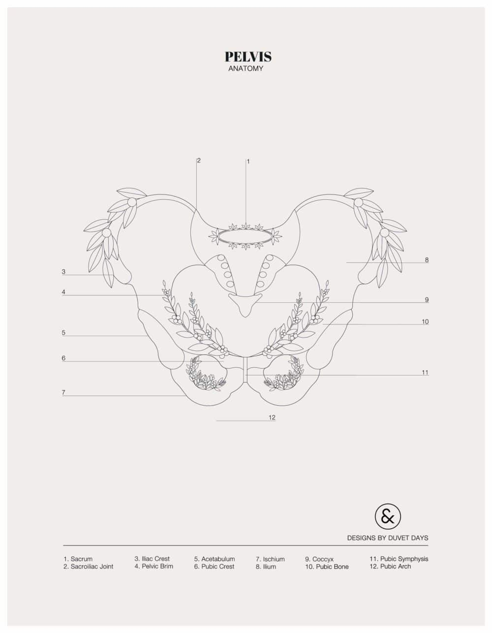 Designs By Duvet Days_8.5x11_Pelvis_Colouring Sheet_Preview